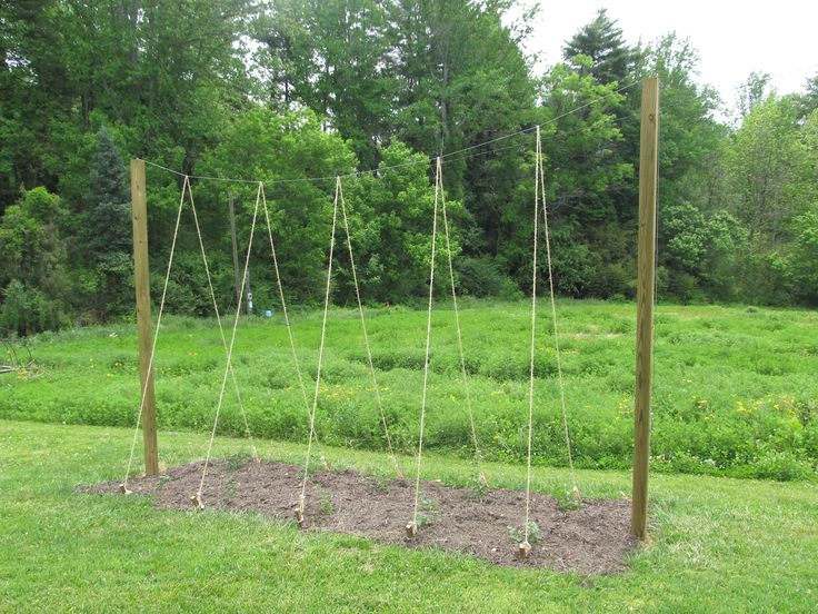 "Materials needed to build a single pole hop trellis: 25' length of 2"" diameter pvc pipe. Description from pinterest.com. I searched for this on bing.com/images"
