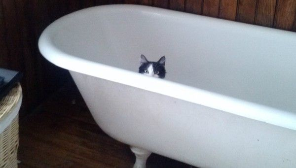 11 Not-So-Stealthy Pets Who Will Never Be Secret Agents