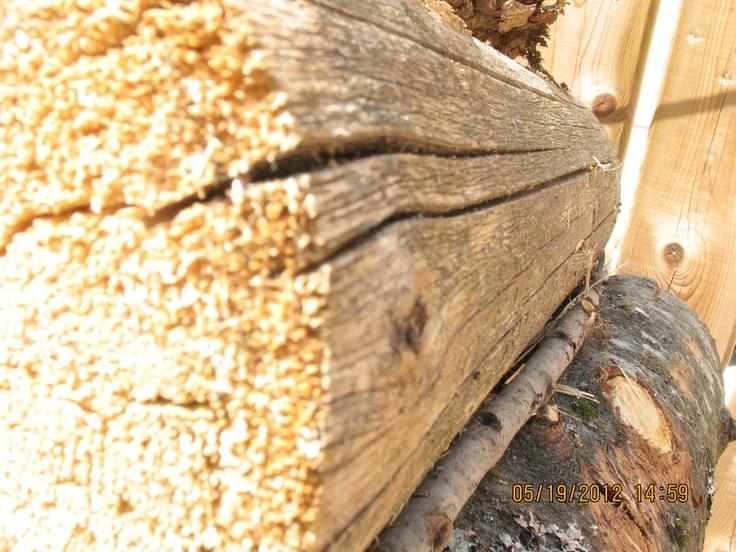 Beauty in the wood by ~Tiffersinger