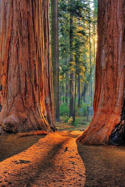 Las más asombrosas fotografias de bosques misteriosos - Vida Lúcida