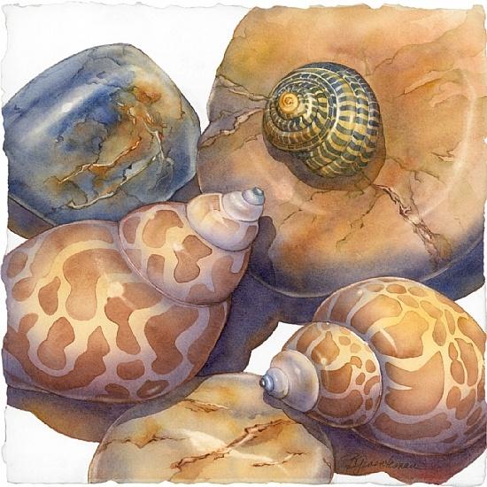 Art of Barbara Groenteman. dreamy watercolour sea shell study, illustration.