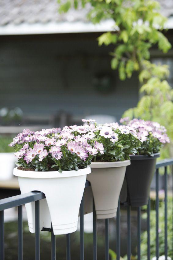 Pratique pour décorer un balcon http://www.m-habitat.fr/terrasse/balcons/les-balconnieres-2829_A #fleur