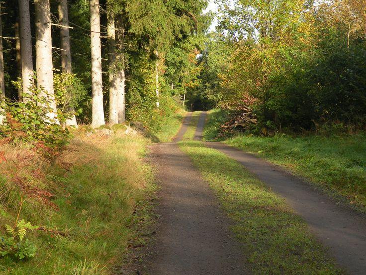 Naturen runt Stoby - vackert och fult - skogsväg