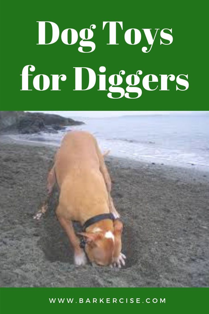 Dog Toys For Diggers Dog Care Tips Digging Dogs
