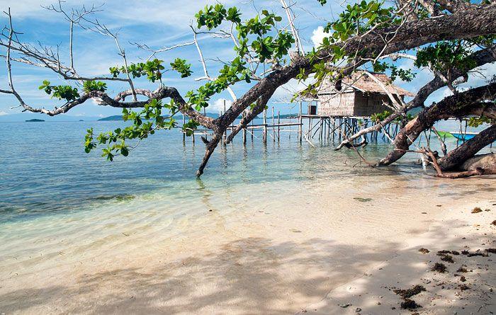 Yenkangkanes Homestay, Saporkren, Waigeo, Raja Ampat    Red and Wilson's birds of paradise, good birding guides
