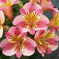 good one for easy summer flowers