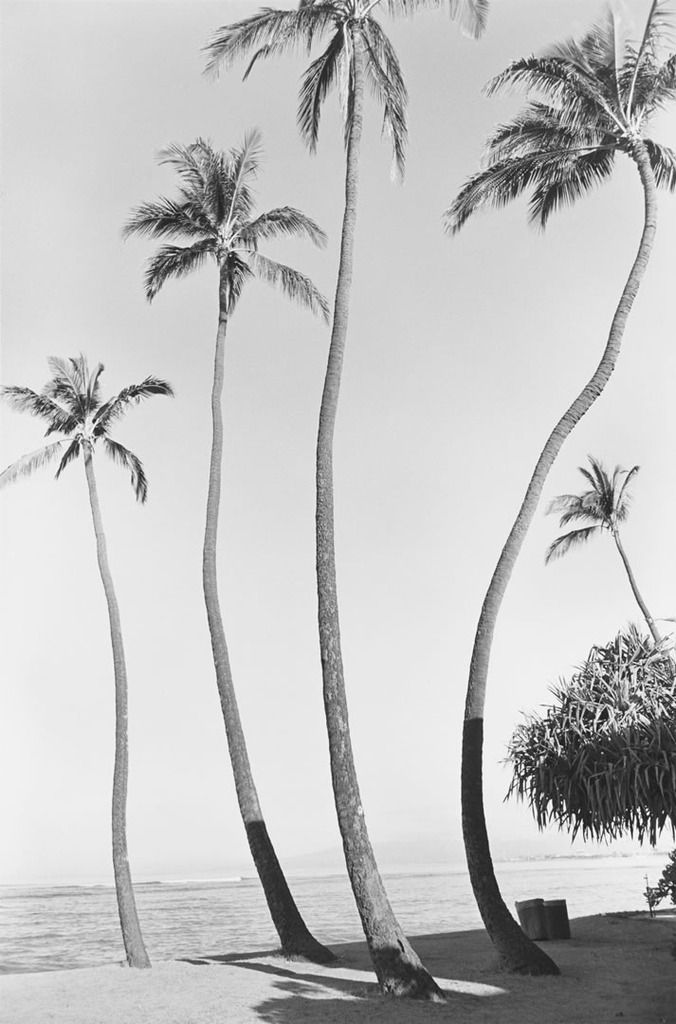 Palm Trees: Islands Life, Beaches Holidays, Palms Beaches, Henry Wessel, Palms Trees, Black White, White Sands Beaches, Surfing Lifestyle, Art Photos