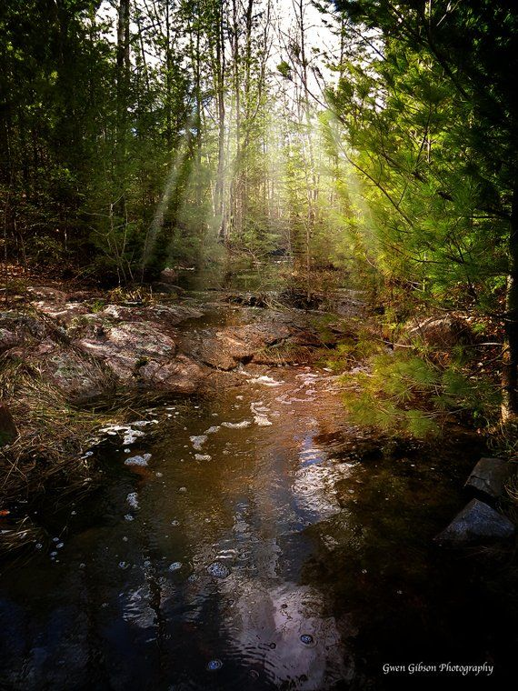 Enchanted Forest Photo, Sun Rays, Fantasy Background ...