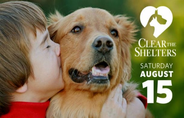 #Puppies #Dogs Need Help - Follow Link to learn More! - http://www.doggiediscussions.com/rescues/clear-the-shelters