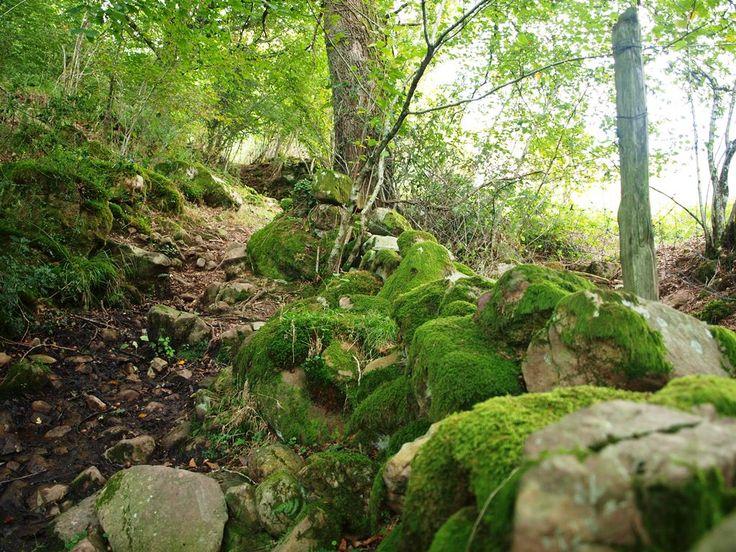 Musgo en la cambera, en Pisueña, Valles Pasiegos (Cantabria)