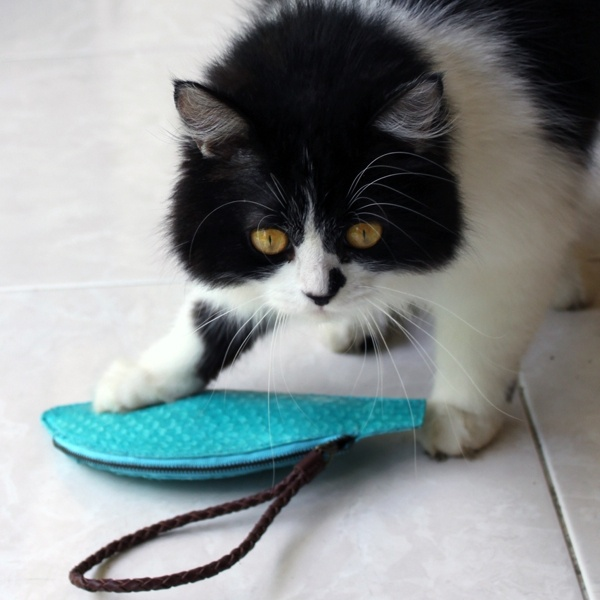 a cat and a fish....pouch - made from tanned tilapia, this one of a kind pouch in turquoise makes quite a statement - www.pantheia.com