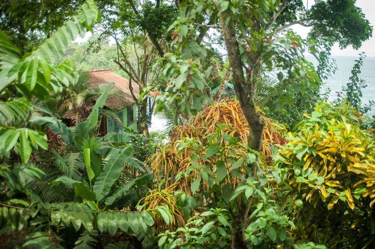 Visiter le Panama, une destination à ne pas manquer (Detour Local) -> La jungle au bord d'une plage magnifique, c'est ça le Panama et Bocas del Toro www.detourlocal.com/que-faire-panama-destination/