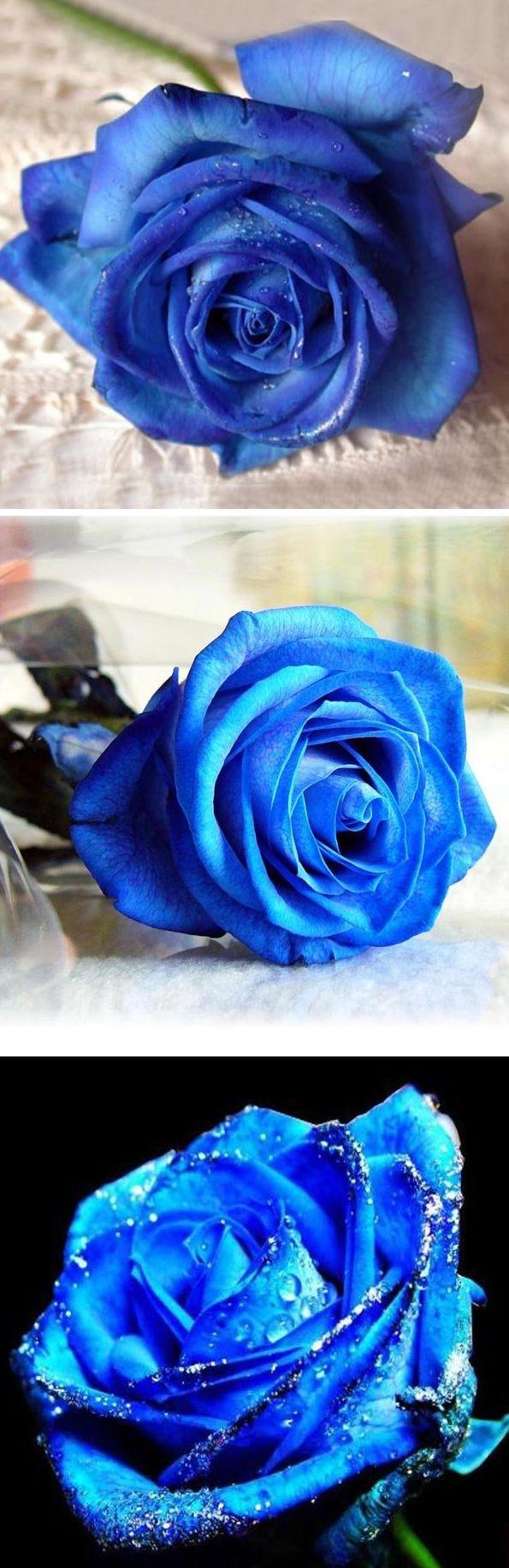 US$2.89 50 Pcs Blue Rose Seeds DIY Home Garden Dec