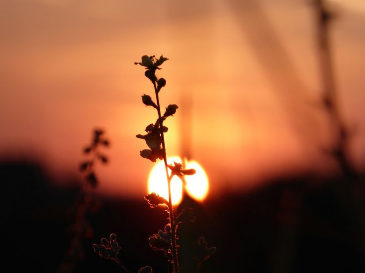 A plant and sunset
