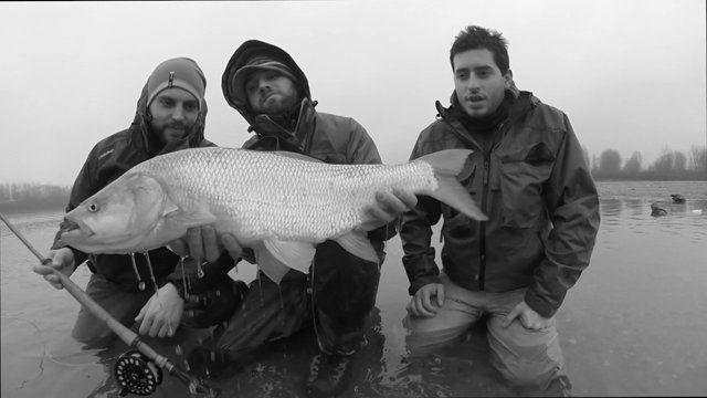 Pescare l'aspio non è per tutti. E' una pesca che richiede tanti sacrifici, tanti chilometri in macchina, a piedi.. sotto il sole, sotto la pioggia, sotto la neve e al freddo. Tanti cappotti e tante giornate sbagliate a lanciare nel nulla. Però quando finalmente arriva quella botta tremenda in canna ci ricordiamo perchè ci appassiona così tanto. Perchè l'aspio non è una cattura... è un trofeo... il NOSTRO TROFEO. (Davide ...