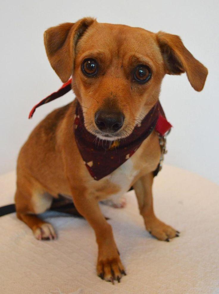Found On Bing From Www Pinterest Co Uk Pet Adoption Center Adoption Pet Adoption