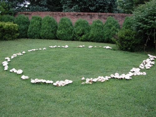 A fairy ring is a naturally occurring ring of mushrooms. They are also known as pixie's rings, faerie circles, or elf circles. The Irish believed that fairy rings were where fairies came to dance and celebrate, the mushrooms of the rings were used as stools for the fairies to recuperate during the evenings festivities.