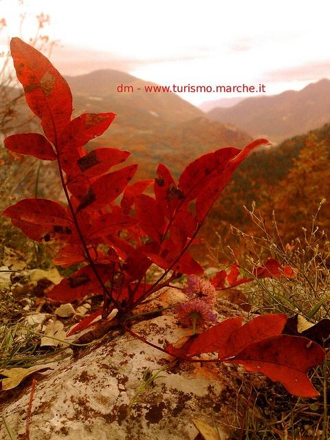 Gola della Rossa, Natural Park - Marche - Italy