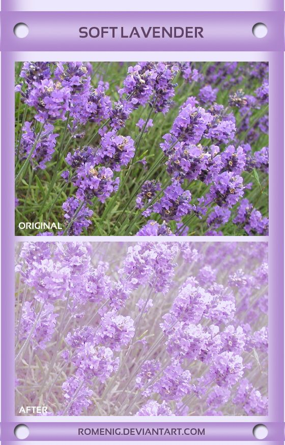 Efeito Lavender Psd Coloring Free