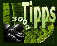 Tipps zur Canon 300d