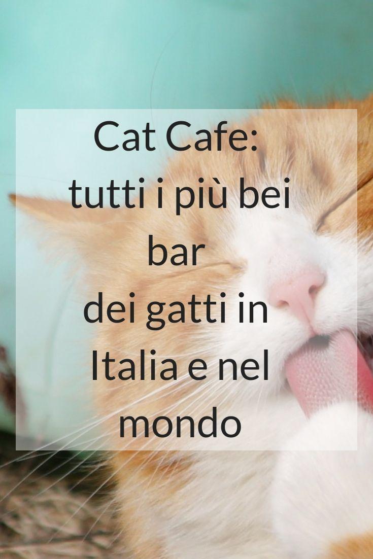 Immagini Dal Mondo Divertenti cat cafe: tutti i più bei bar dei gatti in italia e nel