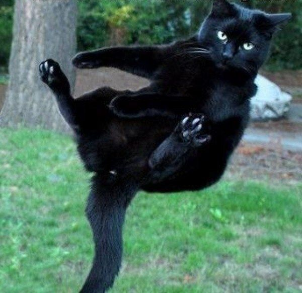 Ten Of The Most Unluckiest Black Cats You Will Ever See Schwarze
