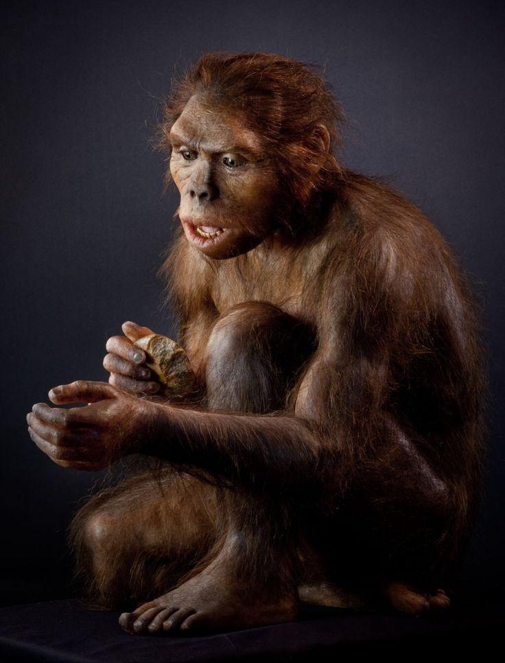 Homo habilis (del latín homo,'hombre', y habilis,'hábil') es un antecesor del hombre extinto que vivió en África desde hace aproximadamente 1,9000000 hasta 1,600000 millones de años antes del presente, en las edades Gelasiense y Calabriense (principios a mediados del Pleistoceno). El descubrimiento de esta especie se debe a Mary y Louis Leakey, quienes encontraron los fósiles en Tanzania, África, entre 1962 y 1964. Cuando fue descubierto se le consideró como la especie más antigua del…