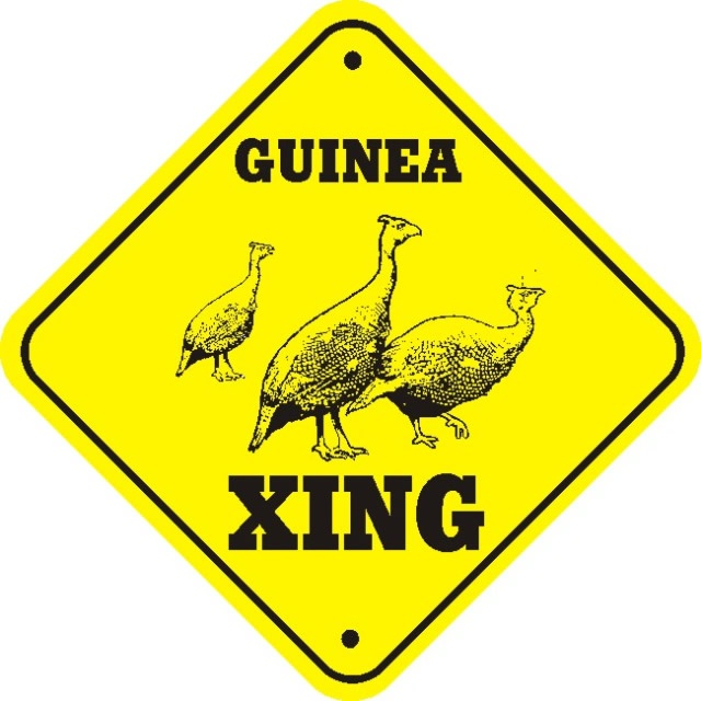 266 Best Guineas To Love Images On Pinterest  Guinea Fowl -9190