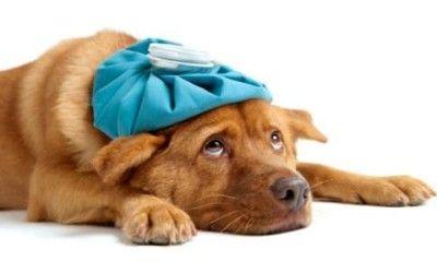 Cibo: Come #curare gli #animali domestici in modo naturale (link: http://ift.tt/2cPvqnv )