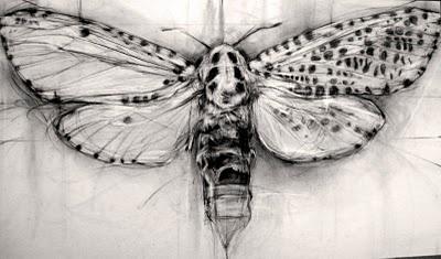 moth: Idea, Bugs, Art Inspiration, Moth Sketch, Moth Drawings, Leopards Moth In Prog2 Jpg, April Coppini, Leopards Prints, A Tattoo