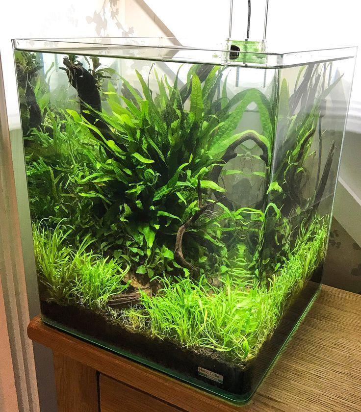 Beautiful Fish Tank Ideas For Relaxing Home Engineering Basic In 2020 Fish Tank Plants Aquascape Aquarium Betta Aquarium
