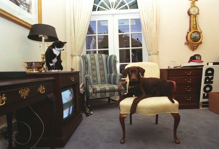 30 Photos Proving The Clinton Administration Was The Golden Age Of White House Pets