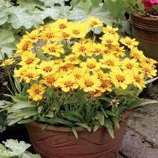 Cele mai populare flori de toamna