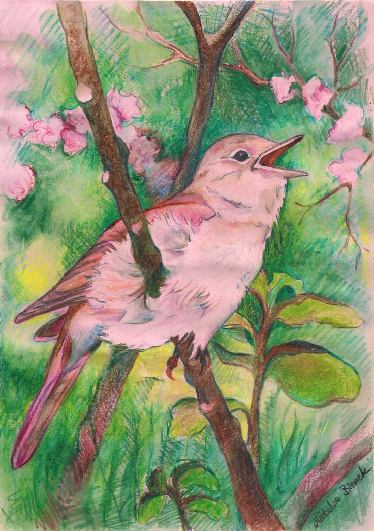 """""""Green-and-pink bird"""" by Natalia Bienek"""