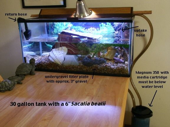 Best 25 Turtle Tank Filters Ideas On Pinterest Turtle