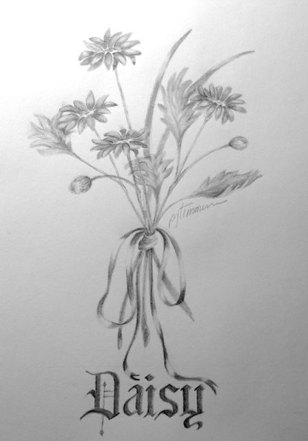 Columbine Flower Line Drawing : Pencil drawing daisy drawings pinterest