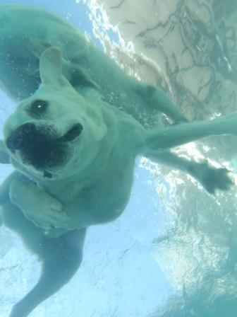 Saba's Dive Dog