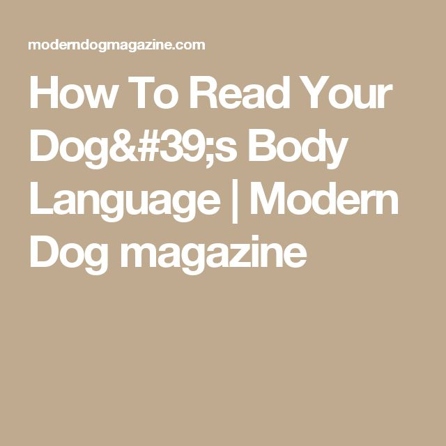 How To Read Your Dog's Body Language | Modern Dog magazine