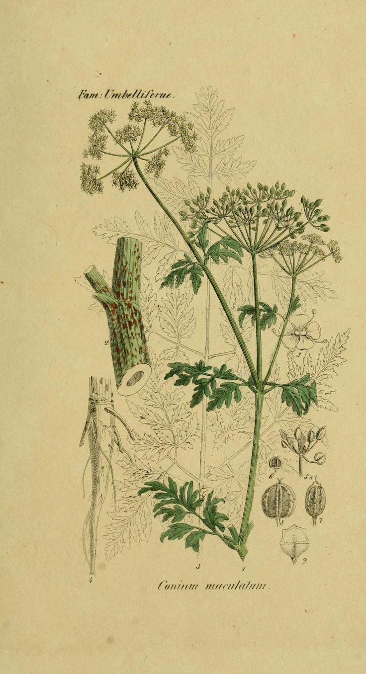De Noord-Nederlandsche vergiftige gewassen - (North Netherlands Toxic Crops) 1836 |