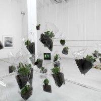 Mikala Dwyer, Hanging Garden, 2014, plastica, piante di Giada, terriccio, corda, dimensioni ambientali, courtesy Studio la Città. Foto: Michele Alberto Sereni.