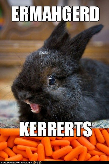 ERMAHGERD!! ( I don't know why I love this meme -- tho I do have particular fun saying them out loud.): Rabbit, Funny Animals, Ermahgerd Kerrerts, Bunny, Funny Stuff, Humor, Bunnies
