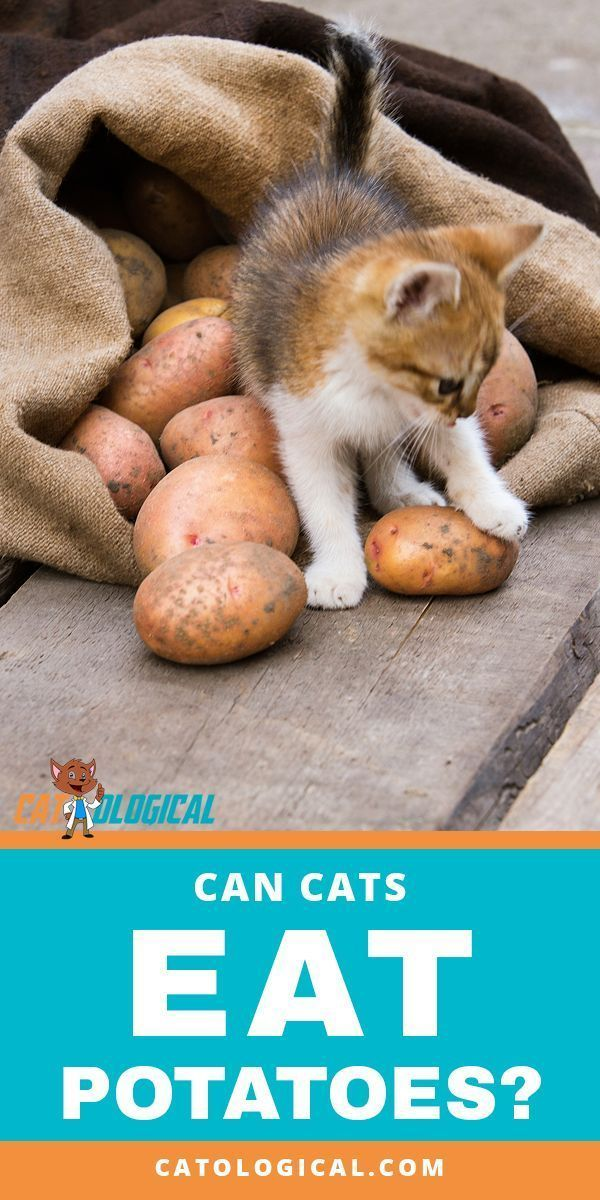 Can Cats Eat Potatoes? Are They Healthy And Safe? Can