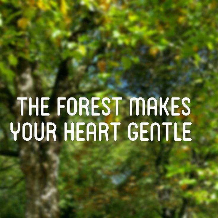 Best Nature Quotes: 17 Best Mother Nature Quotes On Pinterest