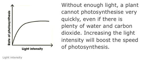 effects of light intensity on photosynthesis essay
