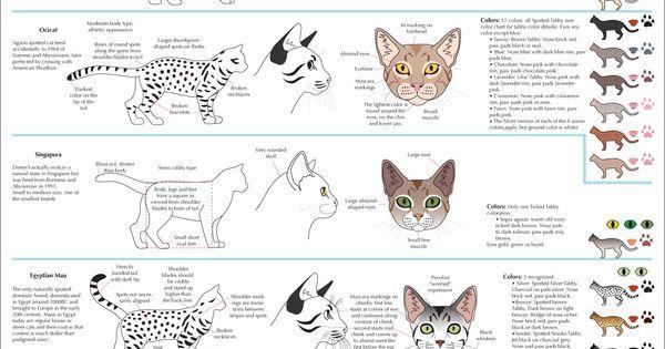 Cat breeds ✤ || CHARACTER DESIGN REFERENCES | 解剖 •  علم التشريح • анатомия • 解剖学 • anatómia • एनाटॉमी • ανατομία • 해부 • Find more at https://www.fa… | Pinteres…