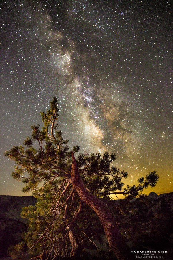 Limber Pine and Milky Way Galaxy, Yosemite by Charlotte Gibb on 500px