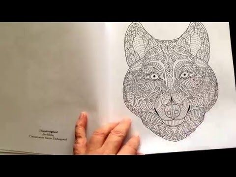 The Exotic Colouring Book By Meg Cowley