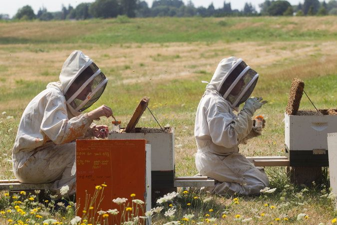 A Sharp Spike in #Honeybee Deaths Deepens a Worrisome Trend  http://www.nytimes.com/2015/05/14/us/honeybees-mysterious-die-off-appears-to-worsen.html?_r=0&utm_content=buffer72958&utm_medium=social&utm_source=pinterest.com&utm_campaign=buffer  Save the #Bees, Save the Humans
