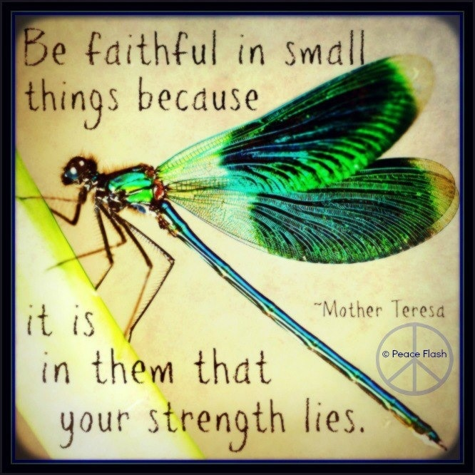 The lil things really do matter, like dragonflies!