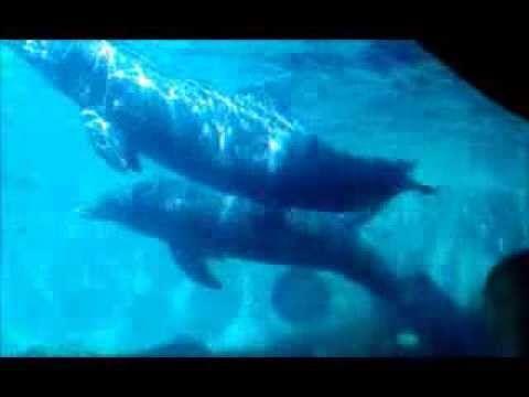 Dolphins Encounters @ Sea World Filmed by Marysol Pena